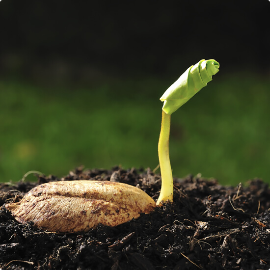 scope-ecoverm-plant-growing-hydroponics-germinating-seeds