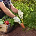 scope-ecoverm-plant-growing-of-vegetables-and-fruits