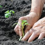 scope-ecoverm-plant-growing-production-of-soil-substrates